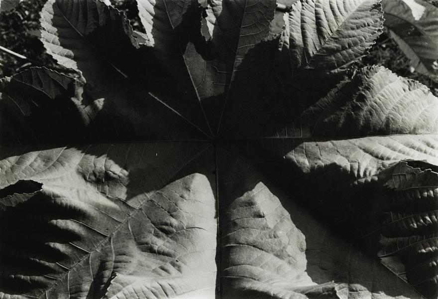 Jay DeFeo, Untitled, c. 1974-75
