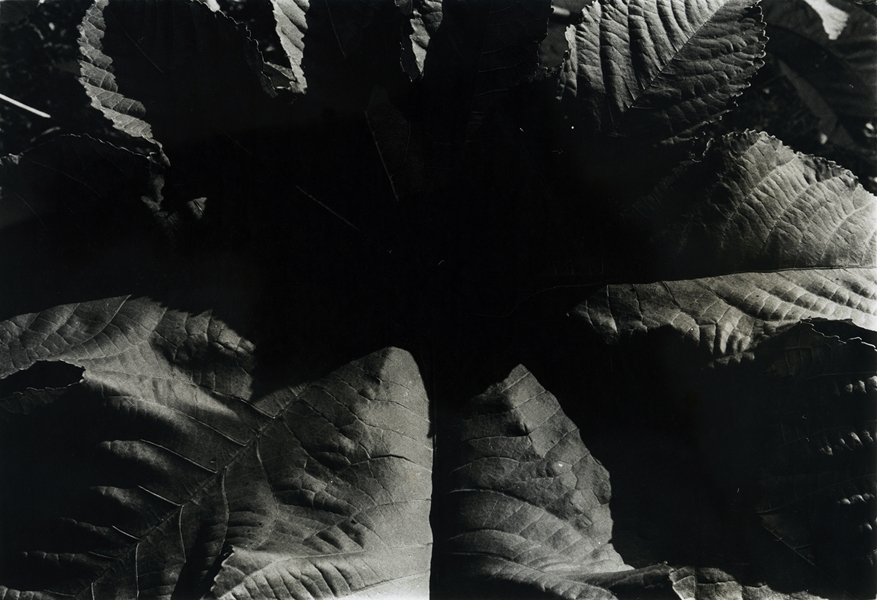 Jay DeFeo, Untitled, 1975