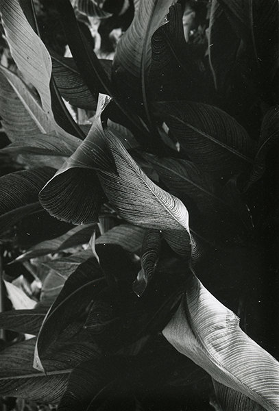 Jay DeFeo, Untitled, 1972