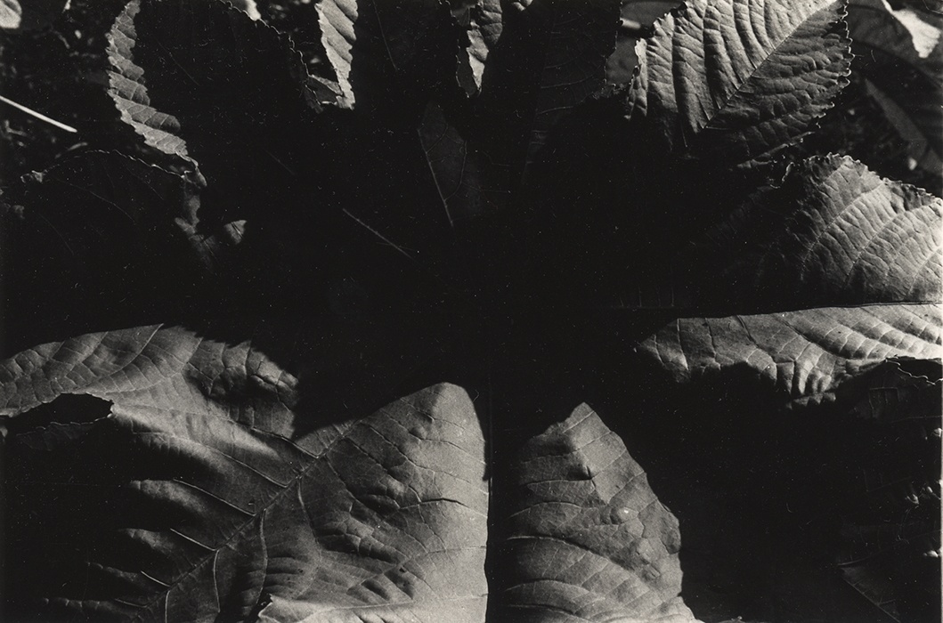 Jay DeFeo, Untitled, c. 1974-75