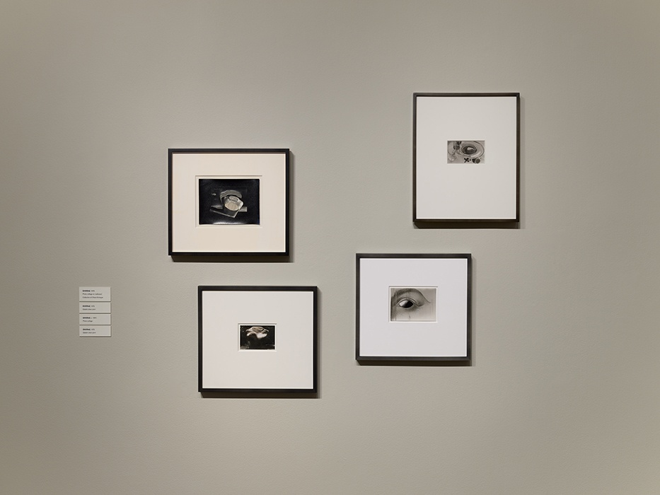 Phil Bond, Installation view of Jay DeFeo: Undersoul at San José Museum of Art, March 8 - July 7, 2019